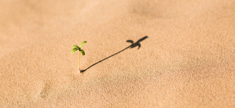 Pflanze, Wüste, unsplash.com, Evan Kirby