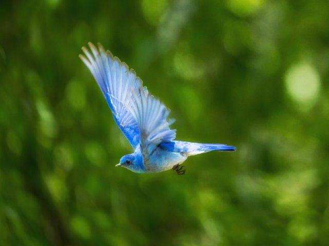 Vogel, Natur, unsplash.com, Andreas Reimann