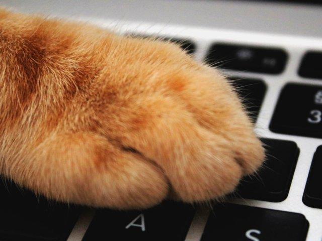 Katze, Cat, Tastatur, Unsplash.com, Aleksandar Cvetanovic