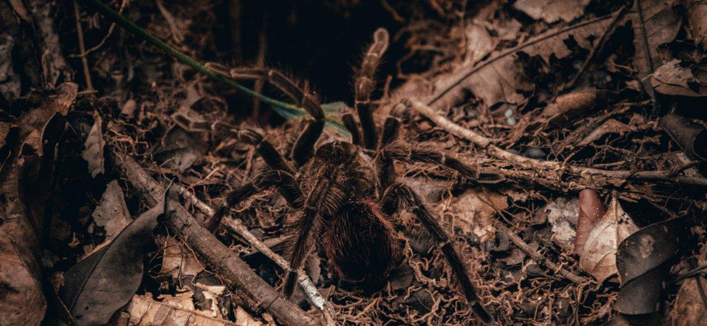 Spinne, Tarantel, unsplash.com, Vinilowraw