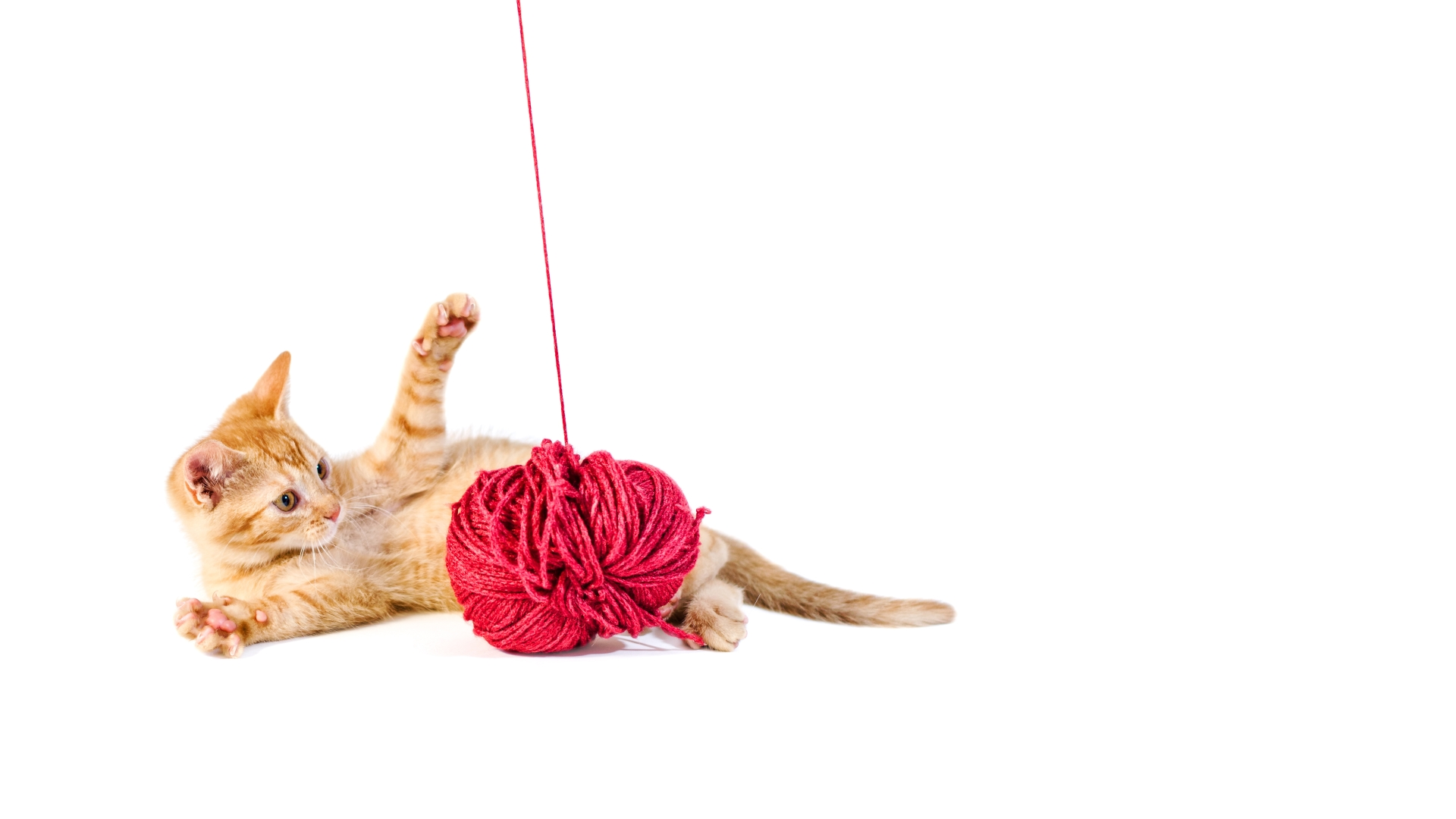 Cute kitten playing with ball of wool, ©5im0n - File #55567302 - AdobeStock.com